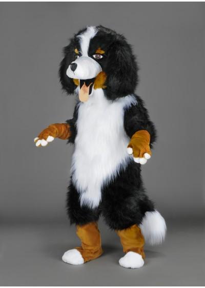 Bernese Mountain Puppy Dog